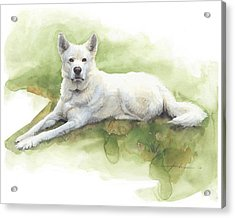 White Sled Dog Lying On Grass Watercolor Portrait Acrylic Print by Mike Theuer