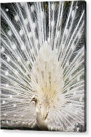 Acrylic Print featuring the photograph White Spray by Blair Wainman