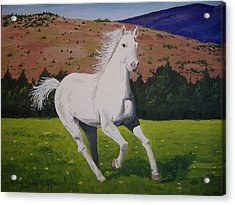 Acrylic Print featuring the painting White Stallion by Norm Starks