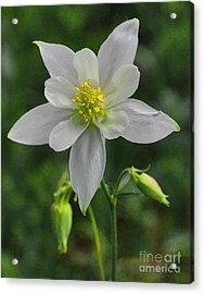 Acrylic Print featuring the digital art White Star Flower by Mae Wertz