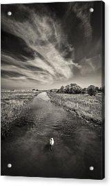 White Swan Acrylic Print