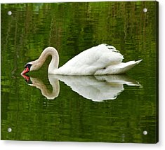 Acrylic Print featuring the photograph Graceful White Swan Heart  by Jerry Cowart