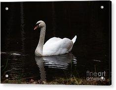 White Swan Lake Acrylic Print