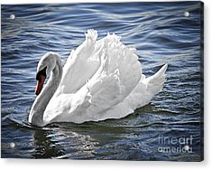 White Swan On Water Acrylic Print by Elena Elisseeva