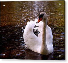 White Swan Acrylic Print by Rona Black