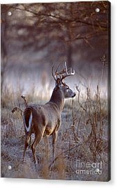 Acrylic Print featuring the photograph White-tailed Deer Buck by Jack R Brock