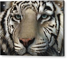 White Tiger - Up Close And Personal Acrylic Print