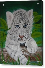 Acrylic Print featuring the painting White Tiger Cub by Mary M Collins