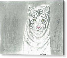 White Tiger Acrylic Print by David Jackson