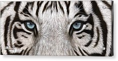 White Tiger Eyes Painting Acrylic Print