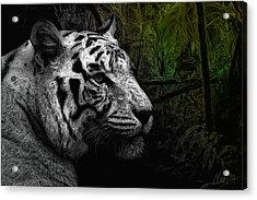 White Tiger Acrylic Print by Marina Likholat