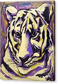White Tiger Not Acrylic Print by Becca Lynn Weeks
