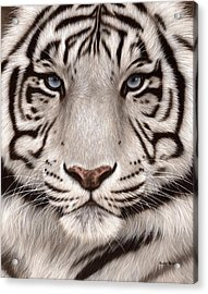 White Tiger Painting Acrylic Print by Rachel Stribbling