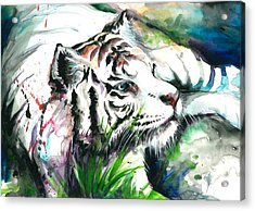 White Tiger Resting Acrylic Print by Tiberiu Soos
