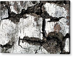 Acrylic Print featuring the photograph White Tree Bark by Crystal Hoeveler