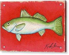 White Trout Acrylic Print