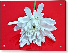 White Flower On Bright Red Background Acrylic Print