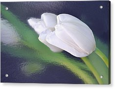 White Tulip Reflected In Dark Blue Water Acrylic Print