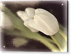 White Tulip Reflected In Misty Water Acrylic Print