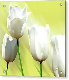 White Tulips Acrylic Print by Ben and Raisa Gertsberg