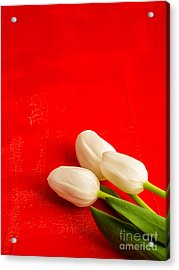 White Tulips Acrylic Print by Edward Fielding