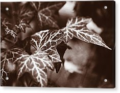 White Veins Acrylic Print by David Davies