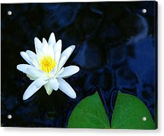 White Water Lilly Abstract Acrylic Print by Judith Russell-Tooth