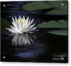 White Water Lily Left Acrylic Print by Sabrina L Ryan
