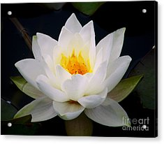 Acrylic Print featuring the photograph White Water Lily by Nina Ficur Feenan