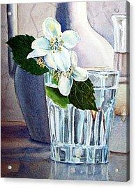 White White Jasmine  Acrylic Print by Irina Sztukowski