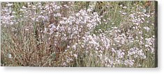 Acrylic Print featuring the photograph White Wild Flowers by Fortunate Findings Shirley Dickerson