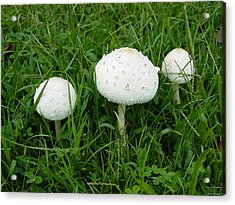 Acrylic Print featuring the photograph White Wild Mushrooms by Dorothy Maier