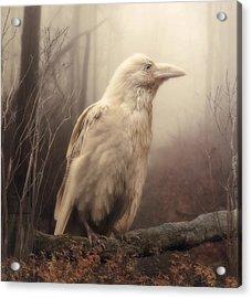 White Wild Raven Acrylic Print by Cindy Grundsten