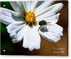White Wildflower Acrylic Print by Lisa L Silva