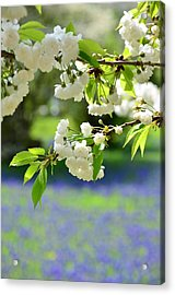 White With Blue Acrylic Print by Gynt