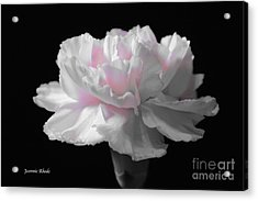 Acrylic Print featuring the digital art White With Pink Carnation by Jeannie Rhode
