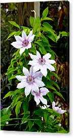 White With Purple Flowers 2 Acrylic Print