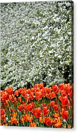 White With Red Acrylic Print by Gynt