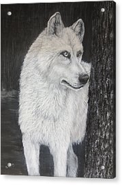 White Wolf On Guard Acrylic Print