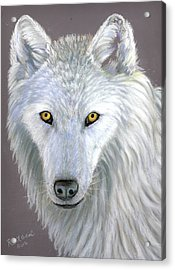 White Wolf Acrylic Print by Ruth Seal