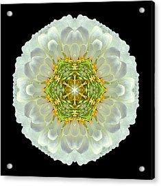 White Zinnia Elegans V Flower Mandala Acrylic Print