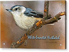 Acrylic Print featuring the photograph Whitebreasted Nuthatch by A Gurmankin