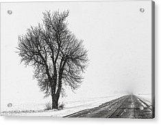 Whiteout Acrylic Print by Chris Austin