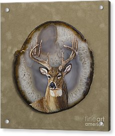 Whitetail Authority Acrylic Print
