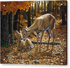 Whitetail Deer - Autumn Innocence 2 Acrylic Print