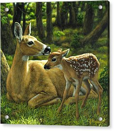 Whitetail Deer - First Spring - Square Acrylic Print by Crista Forest