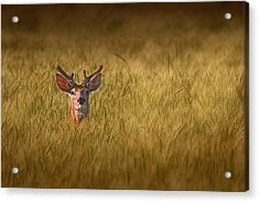 Whitetail Deer In Wheat Field Acrylic Print by Tom Mc Nemar