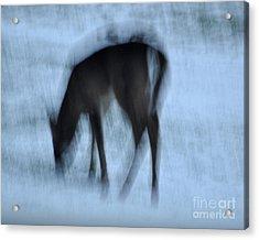 Whitetail Dreams Acrylic Print by Diane E Berry