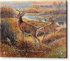 Whitetail Sunrise Acrylic Print by Steve Spencer