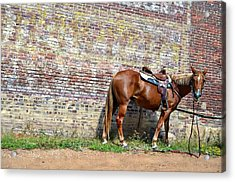 Who Me Acrylic Print by Kelly Kitchens